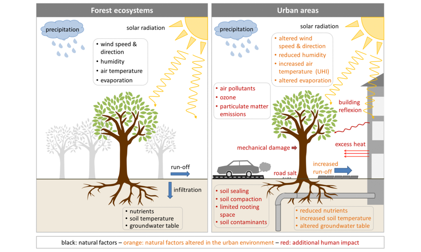 Climate change trees in cities   ESKP